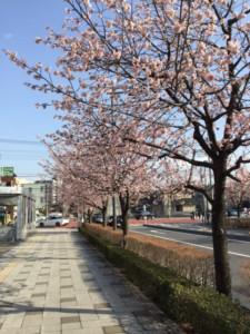 にゃん子のブログ